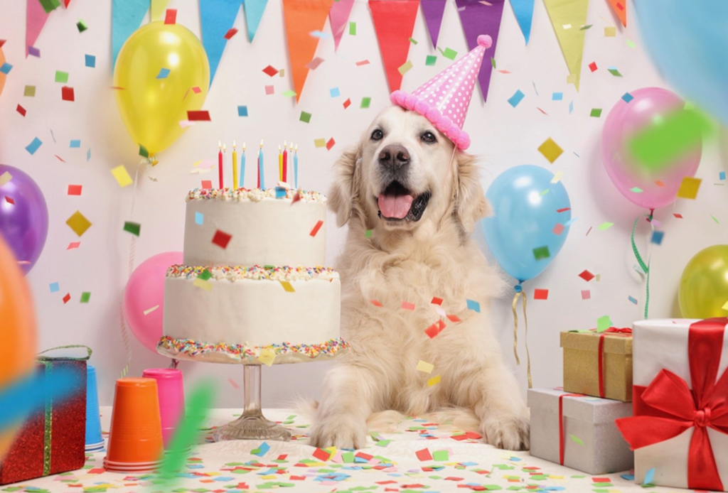 Festeja El Cumpleaños De Tu Perro Con Estos Pasteles Hechos